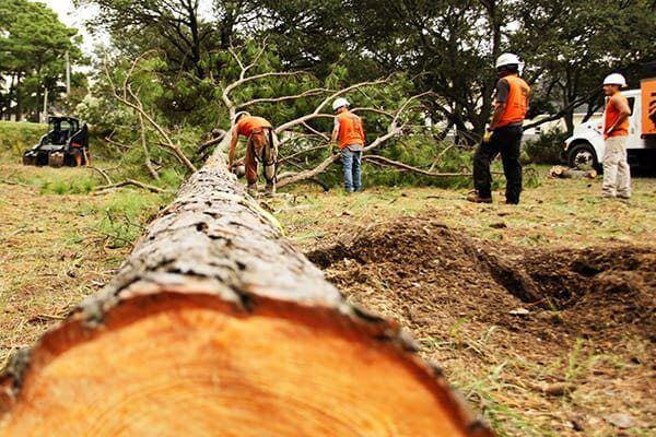 Отсичане на дървета цени