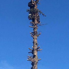 Кастрене на дървета - Rezach.bg