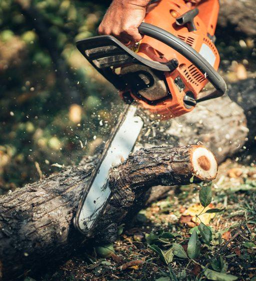 Отсичане на дървета в частен имот