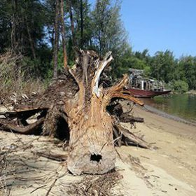 Премахване на опасни дървета - Rezach.bg