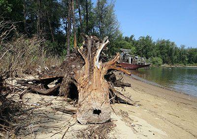 Премахване на опасни дървета