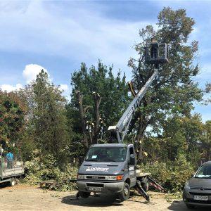 Премахване на опасни дървета Варна - Rezach.bg