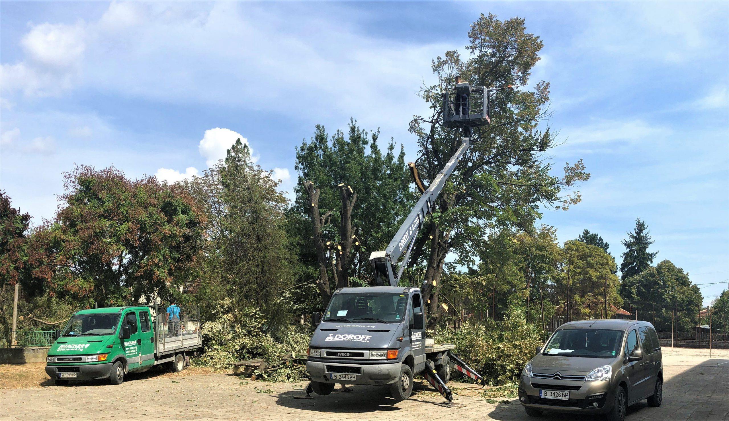 Без остатъци - Изкореняване на дървета - Rezach.bg