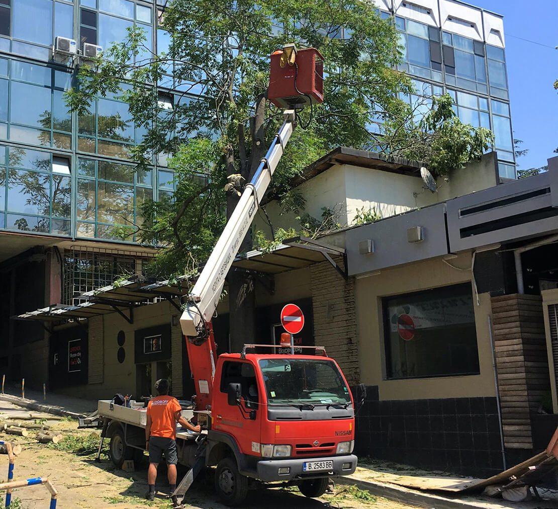 Препоръчвам горещо - Изкореняване на дървета - Rezach.bg