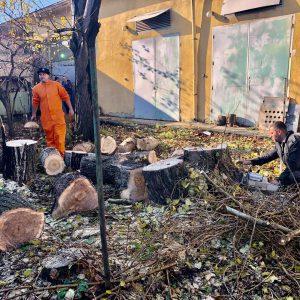Почистване на запустели парцели - Rezach.bg