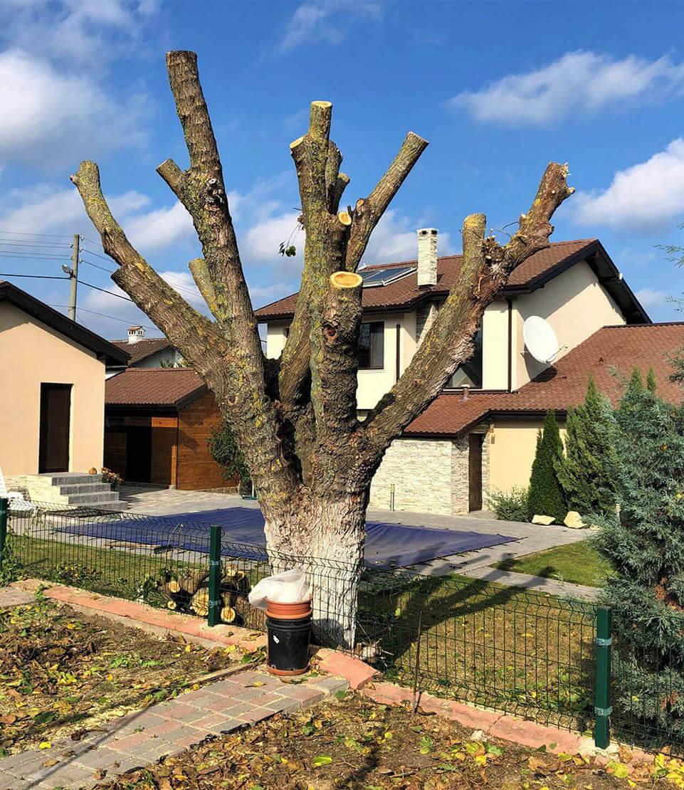 Професионално и бързо - Изкореняване на дървета - Rezach.bg