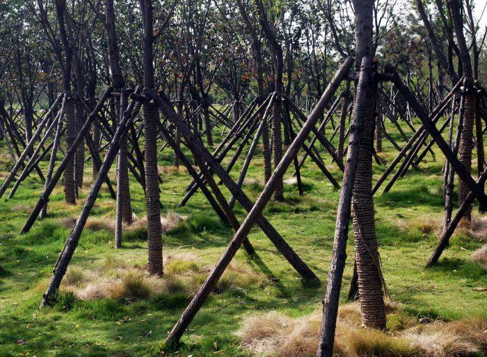 Засаждане на дървета