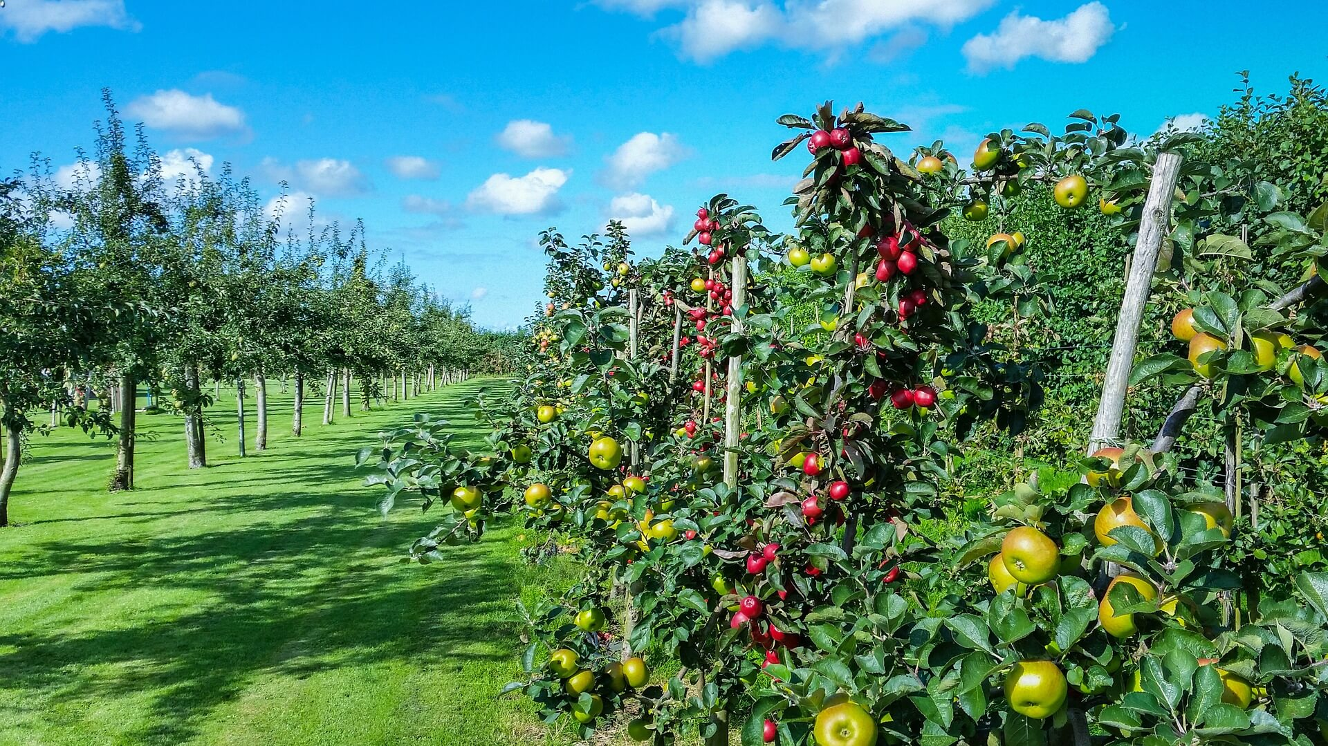 Пръскане на дръвчета в двора - Пръскане на овощни дръвчета - Rezach.bg