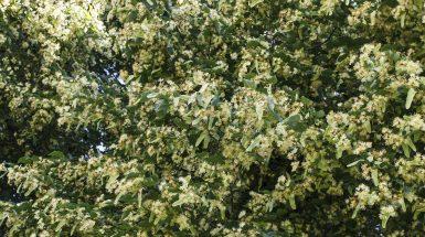Видове дървета в България